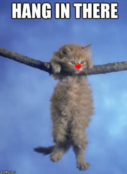 Hang in there Kitty | image tagged in hang in there kitty | made w/ Imgflip meme maker