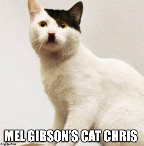 Hitler cat | MEL GIBSON'S CAT CHRIS | image tagged in hitler cat | made w/ Imgflip meme maker