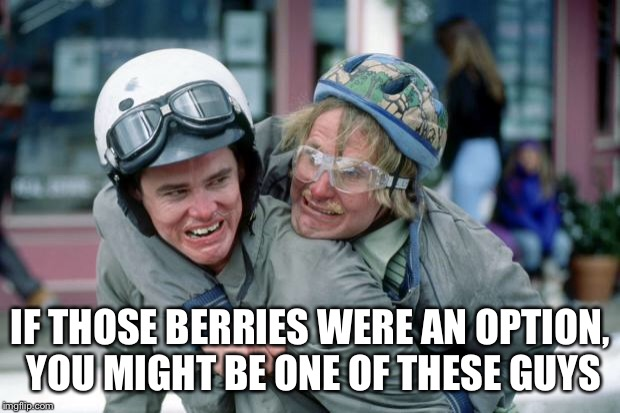 let it go dumb and dumber | IF THOSE BERRIES WERE AN OPTION, YOU MIGHT BE ONE OF THESE GUYS | image tagged in let it go dumb and dumber | made w/ Imgflip meme maker