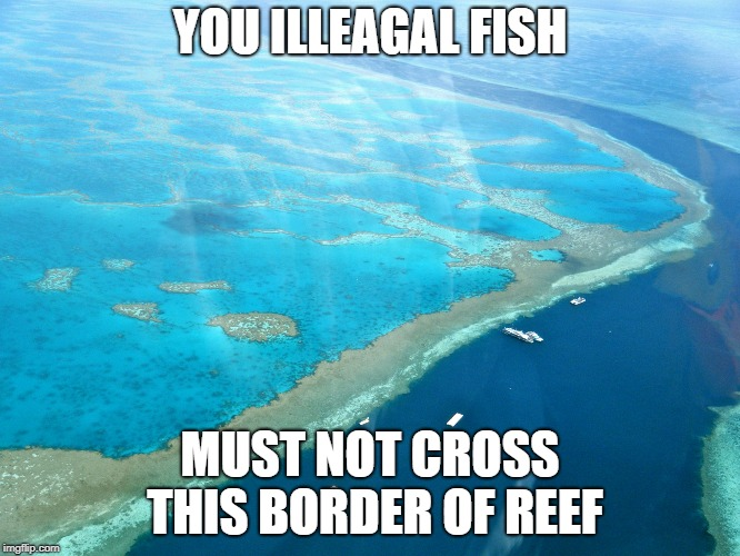 Great Barrier Reef | YOU ILLEAGAL FISH MUST NOT CROSS THIS BORDER OF REEF | image tagged in great barrier reef | made w/ Imgflip meme maker