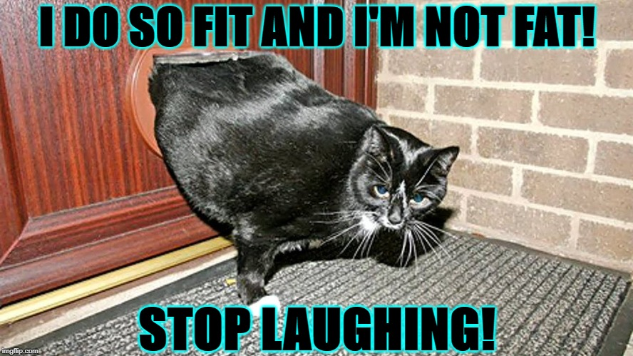 I DO SO FIT AND I'M NOT FAT! STOP LAUGHING! | image tagged in fat slob | made w/ Imgflip meme maker