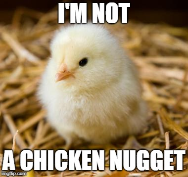 I'M NOT A CHICKEN NUGGET | image tagged in baby chicken | made w/ Imgflip meme maker