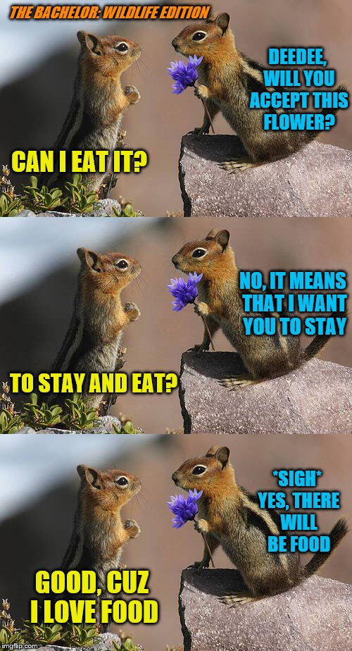 At least she has her priorities straight. | DEEDEE, WILL YOU ACCEPT THIS FLOWER? TO STAY AND EAT? THE BACHELOR: WILDLIFE EDITION CAN I EAT IT? NO, IT MEANS THAT I WANT YOU TO STAY *SIG | image tagged in memes,chipmunks,bachelor,rose ceremony,food,priorities | made w/ Imgflip meme maker