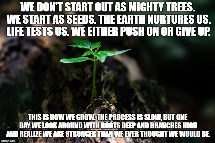 Beginnings | WE DON'T START OUT AS MIGHTY TREES. WE START AS SEEDS. THE EARTH NURTURES US. LIFE TESTS US. WE EITHER PUSH ON OR GIVE UP. THIS IS HOW WE GR | image tagged in beginnings,growth,inspiration,perserverance,tree,seedling | made w/ Imgflip meme maker