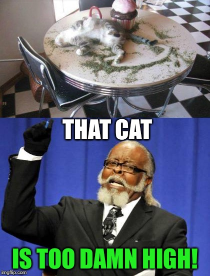 He nipped it in the bud. | THAT CAT IS TOO DAMN HIGH! | image tagged in too damn high,cat,weed,memes,funny | made w/ Imgflip meme maker