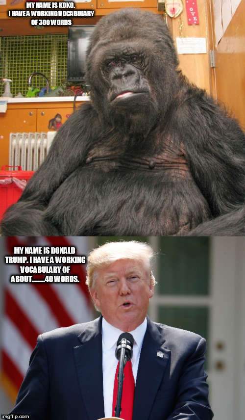 KOKO | MY NAME IS KOKO. I HAVE A WORKING VOCABULARY OF 300 WORDS MY NAME IS DONALD TRUMP. I HAVE A WORKING VOCABULARY OF ABOUT.........40 WORDS. | image tagged in donald trump | made w/ Imgflip meme maker