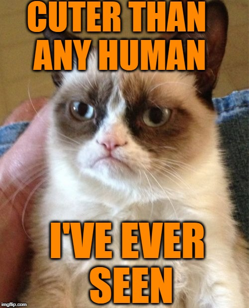 Grumpy Cat Meme | CUTER THAN ANY HUMAN I'VE EVER SEEN | image tagged in memes,grumpy cat | made w/ Imgflip meme maker