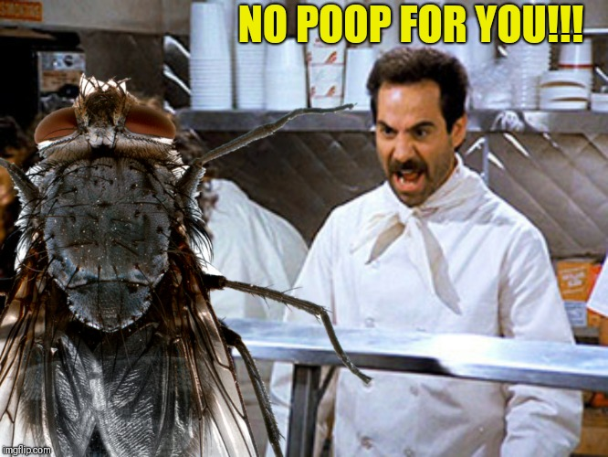 NO POOP FOR YOU!!! | made w/ Imgflip meme maker