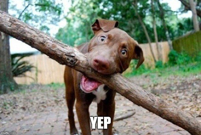 dog stick | YEP | image tagged in dog stick | made w/ Imgflip meme maker