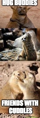 Animals hugging | HUG BUDDIES FRIENDS WITH CUDDLES | image tagged in hug | made w/ Imgflip meme maker
