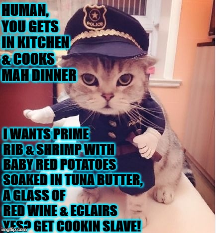 HUMAN, YOU GETS IN KITCHEN & COOKS MAH DINNER I WANTS PRIME RIB & SHRIMP WITH BABY RED POTATOES SOAKED IN TUNA BUTTER, A GLASS OF RED WINE & | image tagged in officer turd cat | made w/ Imgflip meme maker