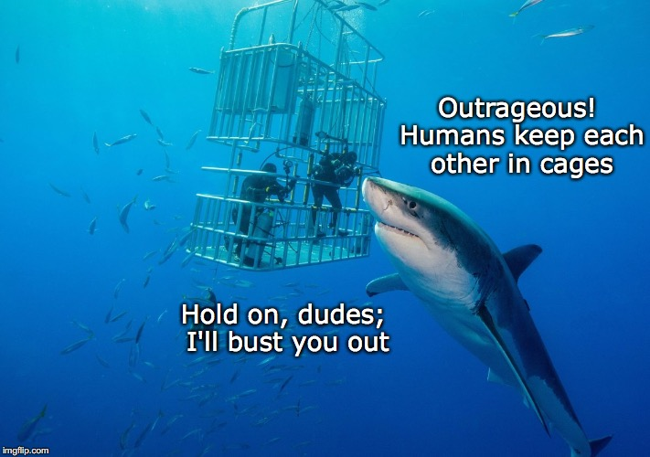 JAIL BAIT | Outrageous! Humans keep each other in cages Hold on, dudes; I'll bust you out | image tagged in sharks,cage | made w/ Imgflip meme maker
