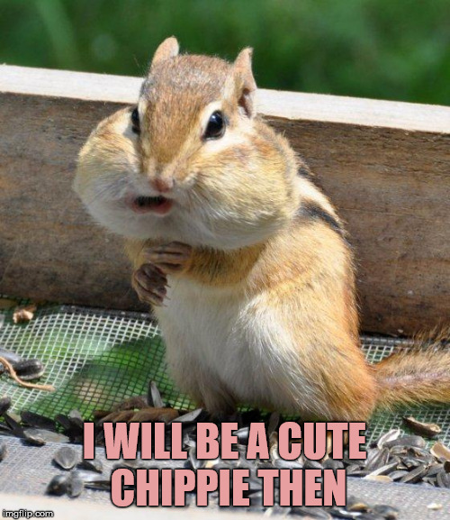 chipmunk | I WILL BE A CUTE CHIPPIE THEN | image tagged in chipmunk | made w/ Imgflip meme maker