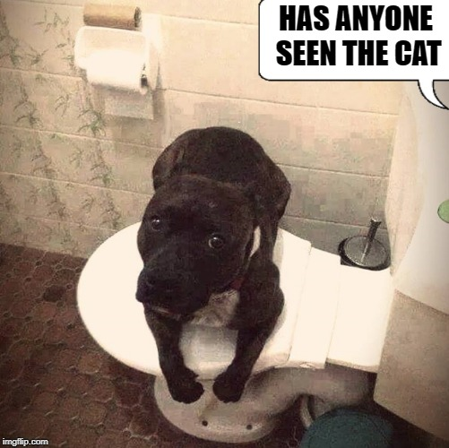 missing cat | HAS ANYONE SEEN THE CAT | image tagged in dog,cat,toilet,funny | made w/ Imgflip meme maker