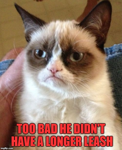Grumpy Cat Meme | TOO BAD HE DIDN'T HAVE A LONGER LEASH | image tagged in memes,grumpy cat | made w/ Imgflip meme maker