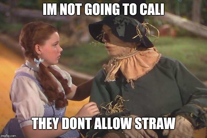 Dorothy and scarecrow | IM NOT GOING TO CALI THEY DONT ALLOW STRAW | image tagged in dorothy and scarecrow | made w/ Imgflip meme maker