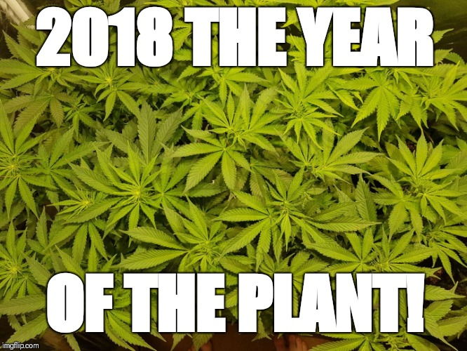 2018 Year of the Plant | 2018 THE YEAR OF THE PLANT! | image tagged in ganja,weed,pot,legalize weed,marijuana | made w/ Imgflip meme maker