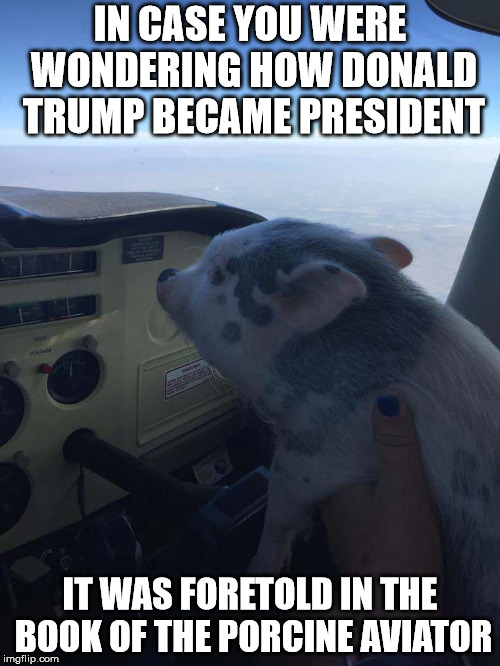 So many people said that Trump would only become president when pigs fly | IN CASE YOU WERE WONDERING HOW DONALD TRUMP BECAME PRESIDENT IT WAS FORETOLD IN THE BOOK OF THE PORCINE AVIATOR | image tagged in when pigs fly,donald j trump | made w/ Imgflip meme maker