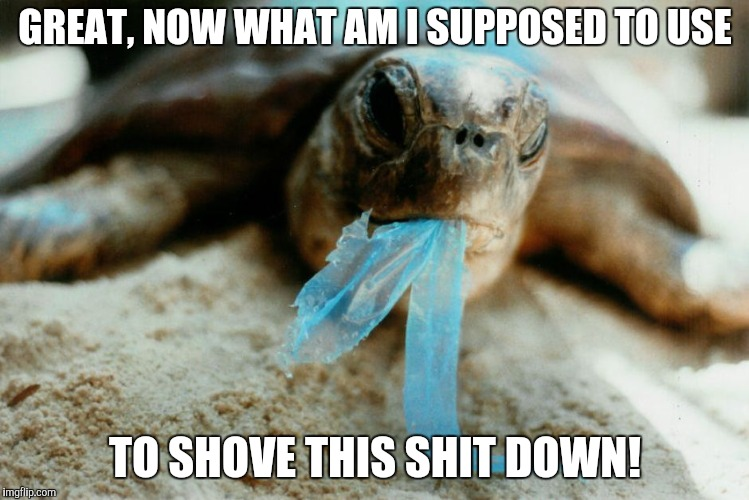 Paper or Plastic | GREAT, NOW WHAT AM I SUPPOSED TO USE TO SHOVE THIS SHIT DOWN! | image tagged in turtle,straws,plastic | made w/ Imgflip meme maker