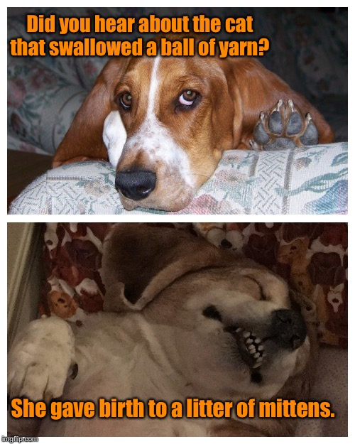 Basset humor  | Did you hear about the cat that swallowed a ball of yarn? She gave birth to a litter of mittens. | image tagged in basset humor,cat jokes,funny memes,dog memes | made w/ Imgflip meme maker