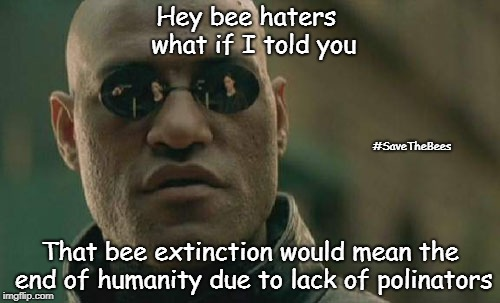 This causes bees to bee important | Hey bee haters         what if I told you That bee extinction would mean the end of humanity due to lack of polinators #SaveTheBees | image tagged in memes,matrix morpheus,bees | made w/ Imgflip meme maker