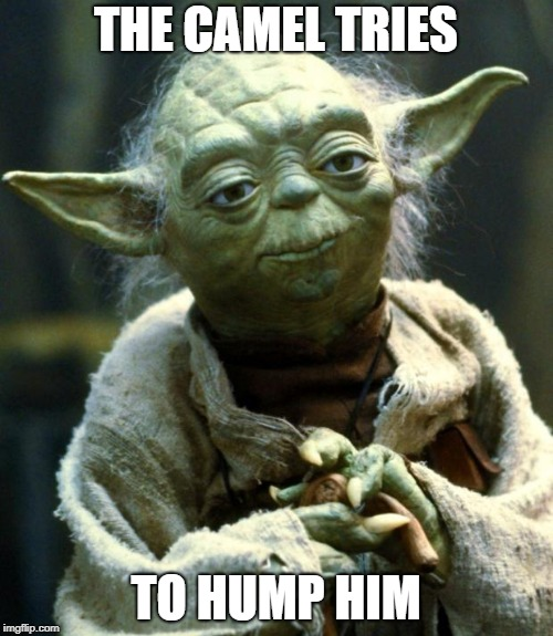 Star Wars Yoda Meme | THE CAMEL TRIES TO HUMP HIM | image tagged in memes,star wars yoda | made w/ Imgflip meme maker