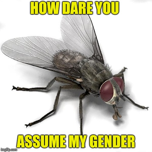 Scumbag House Fly | HOW DARE YOU ASSUME MY GENDER | image tagged in scumbag house fly | made w/ Imgflip meme maker
