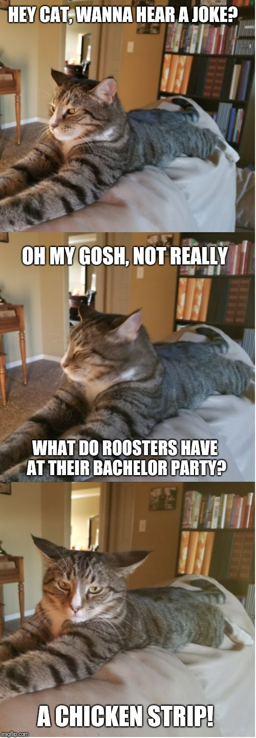 Bad Cat Joke | HEY CAT, WANNA HEAR A JOKE? OH MY GOSH, NOT REALLY WHAT DO ROOSTERS HAVE AT THEIR BACHELOR PARTY? A CHICKEN STRIP! | image tagged in bad cat joke | made w/ Imgflip meme maker