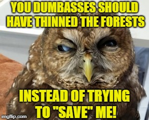 "The Carr Fire is devastating our area! Shasta County, CA | YOU DUMBASSES SHOULD HAVE THINNED THE FORESTS INSTEAD OF TRYING TO ""SAVE"" ME! 