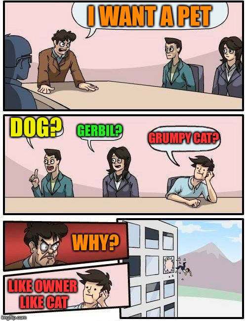 Boardroom Meeting Suggestion Meme | I WANT A PET DOG? GERBIL? GRUMPY CAT? LIKE OWNER LIKE CAT WHY? | image tagged in memes,boardroom meeting suggestion | made w/ Imgflip meme maker
