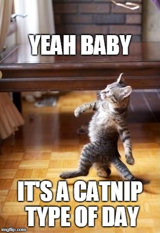 Cool Cat Stroll | YEAH BABY IT'S A CATNIP TYPE OF DAY | image tagged in memes,cool cat stroll | made w/ Imgflip meme maker