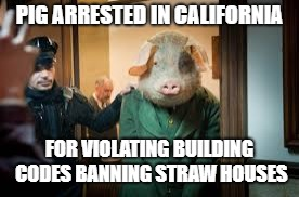 Nursery rhymes will never be the same... |  PIG ARRESTED IN CALIFORNIA; FOR VIOLATING BUILDING CODES BANNING STRAW HOUSES | image tagged in straws,piggy,nursery rhymes | made w/ Imgflip meme maker