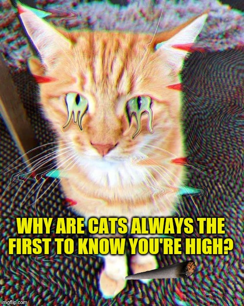 Hi Kitty! | WHY ARE CATS ALWAYS THE FIRST TO KNOW YOU'RE HIGH? | image tagged in cats,420,420 blaze it,weed,trippy,cat | made w/ Imgflip meme maker