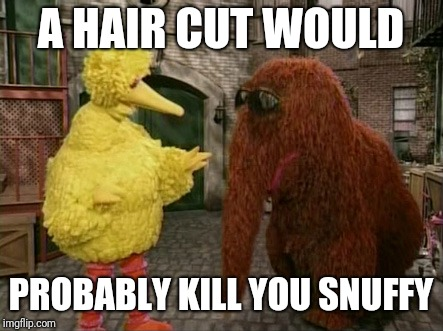 Big Bird And Snuffy Meme | A HAIR CUT WOULD PROBABLY KILL YOU SNUFFY | image tagged in memes,big bird and snuffy | made w/ Imgflip meme maker