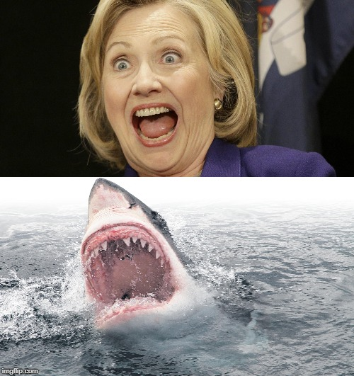 In Honour Of Shark Week | image tagged in hillary,jaws,funny meme | made w/ Imgflip meme maker