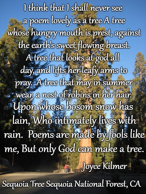 Poem By Joyce Kilmer - Trees. Set in Sequoia National Forest | I think that I shall never see a poem lovely as a tree A tree whose hungry mouth is prest, against the earth's sweet flowing breast. Joyce K | image tagged in god,poem,poems,tree,lord | made w/ Imgflip meme maker