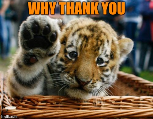 Tiger 5 | WHY THANK YOU | image tagged in tiger 5 | made w/ Imgflip meme maker