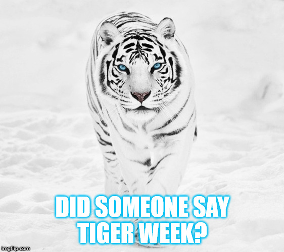 DID SOMEONE SAY TIGER WEEK? | made w/ Imgflip meme maker
