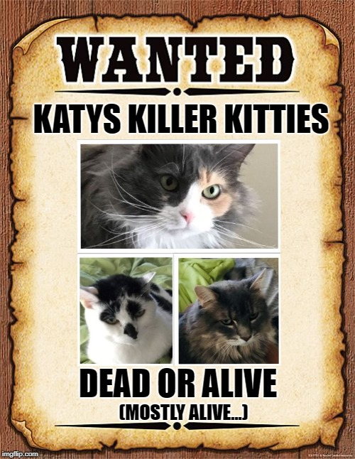 wanted poster | KATYS KILLER KITTIES DEAD OR ALIVE (MOSTLY ALIVE...) | image tagged in wanted poster | made w/ Imgflip meme maker