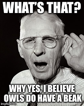 Deaf man says... | WHAT'S THAT? WHY YES, I BELIEVE OWLS DO HAVE A BEAK | image tagged in deaf man says | made w/ Imgflip meme maker