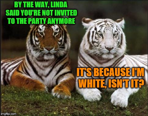 Tiger Week Jul 29 - Aug 5, A TigerLegend1046 event | BY THE WAY, LINDA SAID YOU'RE NOT INVITED TO THE PARTY ANYMORE IT'S BECAUSE I'M WHITE, ISN'T IT? | image tagged in two tigers,memes,tiger week,tiger week 2018,tigerlegend1046 | made w/ Imgflip meme maker