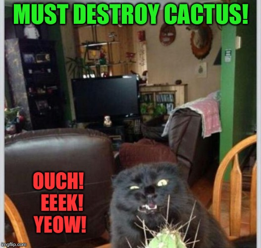 Curses!  Foiled by this devious plant! | MUST DESTROY CACTUS! OUCH!  EEEK! YEOW! | image tagged in cat,cactus,destroy,memes,funny | made w/ Imgflip meme maker