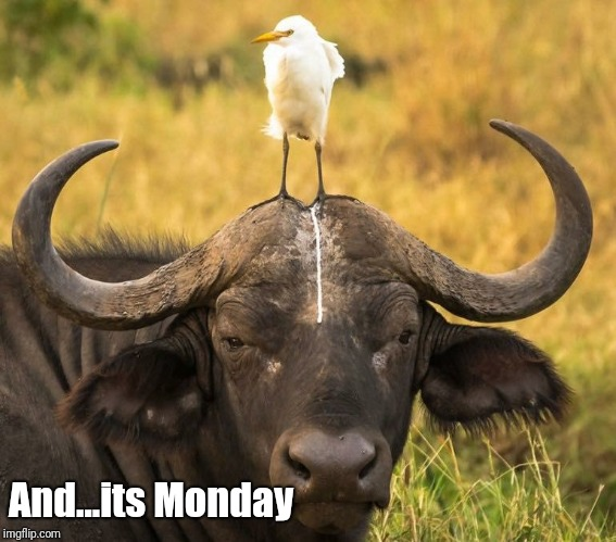 And...its Monday | image tagged in monday | made w/ Imgflip meme maker