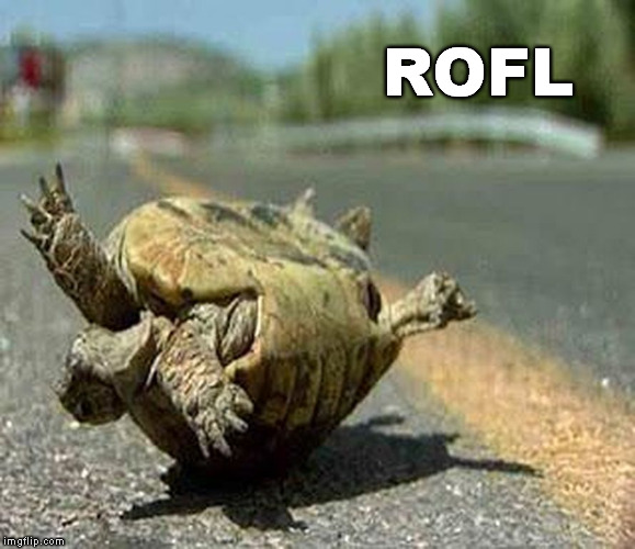 turning turtle ROFL | ROFL | image tagged in turning turtle rofl | made w/ Imgflip meme maker