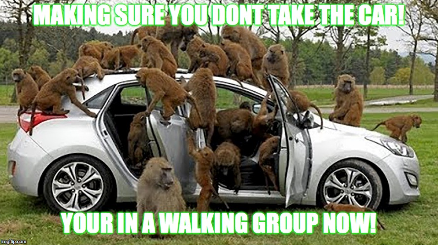 MAKING SURE YOU DONT TAKE THE CAR! YOUR IN A WALKING GROUP NOW! | image tagged in monkeys | made w/ Imgflip meme maker