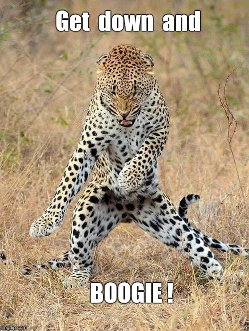 Secret Life of Animals | Get  down  and BOOGIE ! | image tagged in leopard standing 500x666,memes,boogie,funny animals | made w/ Imgflip meme maker