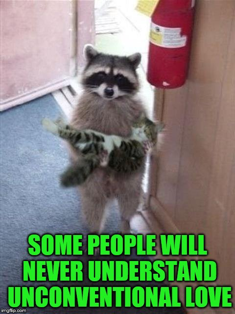 Cat Burglar Raccoon | SOME PEOPLE WILL NEVER UNDERSTAND UNCONVENTIONAL LOVE | image tagged in cat burglar raccoon | made w/ Imgflip meme maker