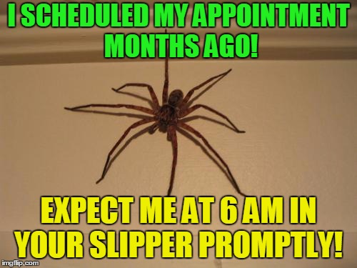 Scumbag Spider | I SCHEDULED MY APPOINTMENT MONTHS AGO! EXPECT ME AT 6 AM IN YOUR SLIPPER PROMPTLY! | image tagged in scumbag spider | made w/ Imgflip meme maker