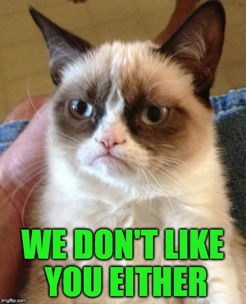 Grumpy Cat Meme | WE DON'T LIKE YOU EITHER | image tagged in memes,grumpy cat | made w/ Imgflip meme maker