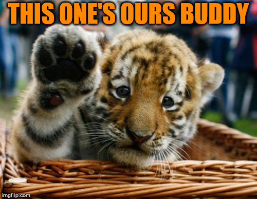 Tiger 5 | THIS ONE'S OURS BUDDY | image tagged in tiger 5 | made w/ Imgflip meme maker